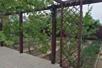 Шпалера для винограда из дерева, цвет орех